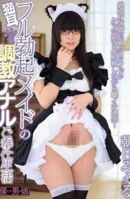 BOKD-130 Cat Ears Full Erection Maid Training Anal Companion Life Asahi Mikuru